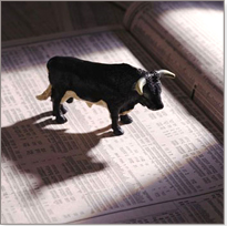 Bull Market - If you want to be a successful trader of stocks, contact Tina Logan in La Jolla, California, for day trading training, including risk management and stock screening.